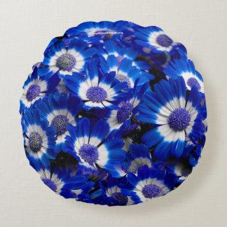 Schöne königliches Blaucineraria-Blumen Rundes Kissen