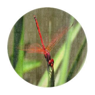 Schöne Kracher-Libelle Schneidebrett