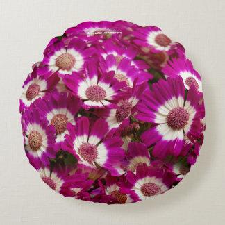 Schöne lila Cineraria-Blumen Rundes Kissen