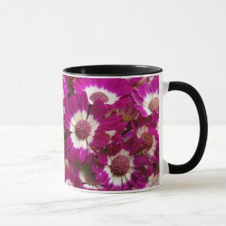 Schöne lila Cineraria-Blumen Tasse