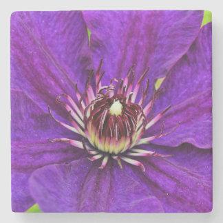 Schöne lila Clematis-Blume Steinuntersetzer