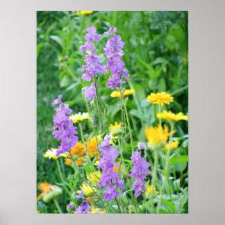 Schöne lila und gelbe Wildblumen Poster