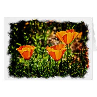 Schöne Mohnblumen Grußkarte
