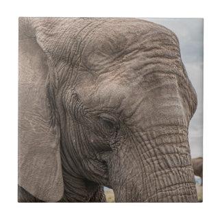 Schöne Nahaufnahme des afrikanischen Elefanten Fliese