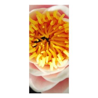 Schöne nenufar Pflanze/Blume Werbekarte