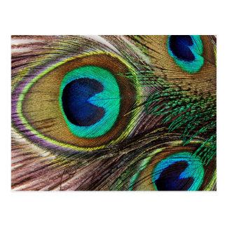 Schöne Pfau-Federn Postkarte