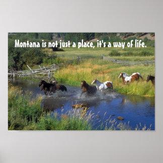 Schöne Pferde kreuzen einen Gebirgsstrom Poster
