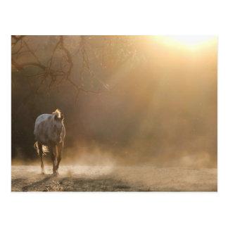 Schöne Pferdeim Sonnenlicht Geschenke Postkarte