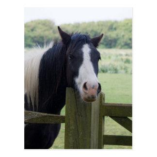 Schöne Pferdekopfnahaufnahmepostkarte Postkarte