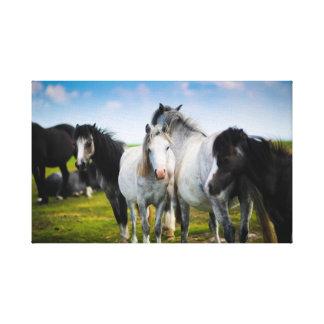 Schöne PferdeLeinwand Leinwanddruck