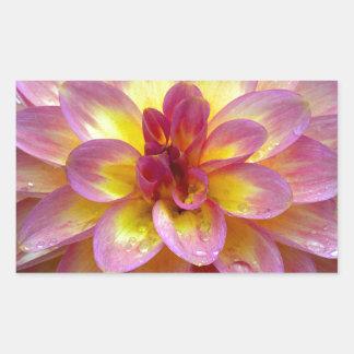 Schöne rosa Dahlie-Blume mit Regentropfen Rechteckiger Aufkleber