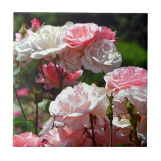 Schöne rosa Frühlings-Rosen Fliese