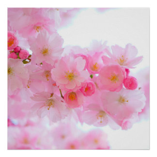Schöne rosa japanische Kirschbaum-Blüte Poster