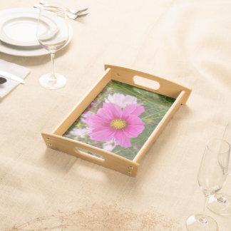 Schöne rosa Kosmos-Blume Serviertablett