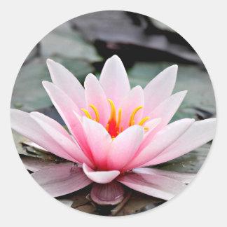 Schöne rosa Lotos-Blumen-Wasserliliezen-Kunst Runder Aufkleber
