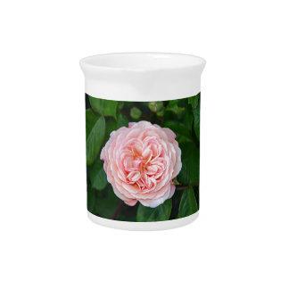 Schöne rosa Single-Rose Krug