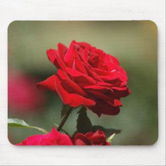 Schöne Rote Rose Mousepad