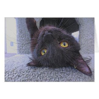 Schöne schwarze Katze Karte