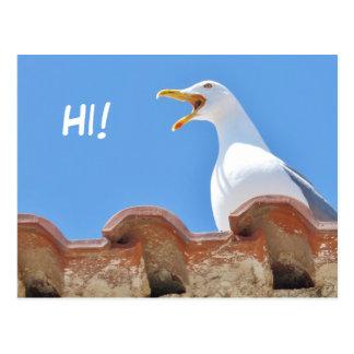 Schöne Seemöwe - hallo Postkarte