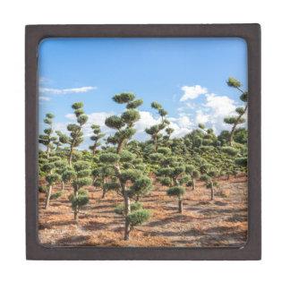 Schöne Topiaryformen in den Nadelbäumen Schmuckkiste