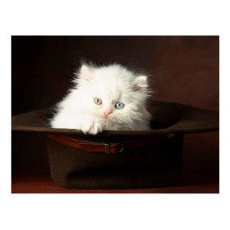 Schöne weiße Katze in einem Hut Postkarten