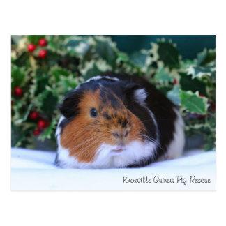 Schöne Winter-Meerschweinchen-Postkarte Postkarten
