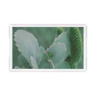 Schöne Wüsten-Pflanzen-Kunst-Fotografie Acryl Tablett