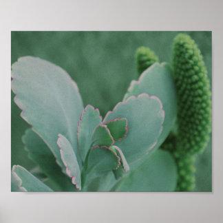 Schöne Wüsten-Pflanzen-Kunst-Fotografie Poster