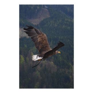 Schöner Adler im Flug Briefpapier