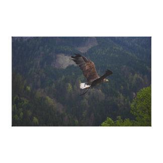 Schöner Adler im Flug Leinwanddruck