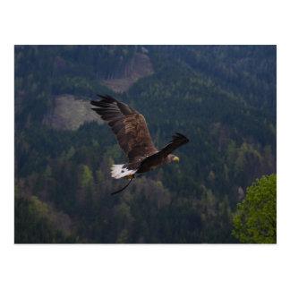 Schöner Adler im Flug Postkarten
