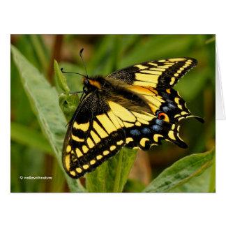 Schöner Anis-Frack-Schmetterling im Gras Karte