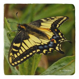 Schöner Anis-Frack-Schmetterling im Gras Töpfeuntersetzer