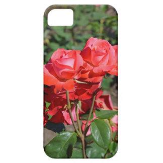 Schöner blühender Rosendruck Etui Fürs iPhone 5