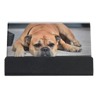 Schöner Brown-Bulldoggen-Hund, der auf die Schreibtisch-Visitenkartenhalter