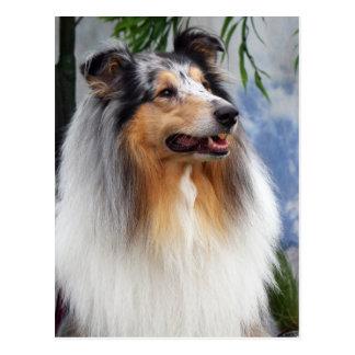 Schöner Colliehundblaue merle Porträtpostkarte Postkarte
