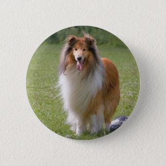 Schöner Colliehundeporträtknopf, Geschenkidee Runder Button 5,7 Cm