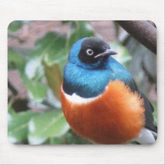 Schöner exotischer Vogel gehockt Mousepad