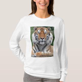 Schöner Fotohauptfrauen des Tigers, Damen-T - T-Shirt