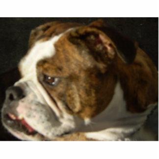 Schöner Hund! Freistehende Fotoskulptur