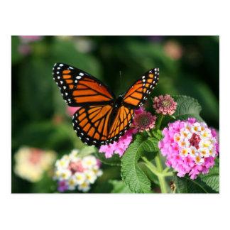 Schöner Monarchfalter Postkarte