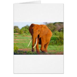 Schöner orange Elefant Karte
