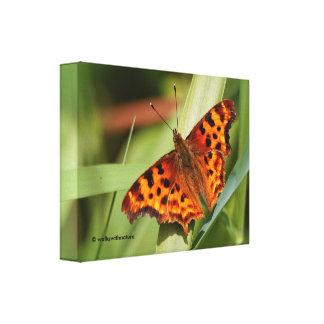 Schöner orange Satyr-Komma-Schmetterling Leinwanddruck