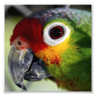 Schöner Papagei Kunst Fotos