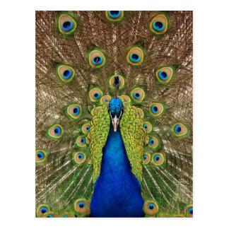 Schöner Pfau- und Schwanzfederdruck Postkarte