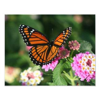 Schöner Schmetterling auf Lantana-Blume Fotodruck