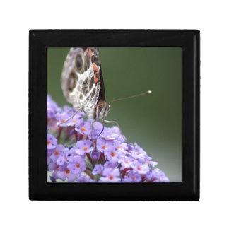 Schöner Schmetterling auf Schmetterlingsbusch Erinnerungskiste