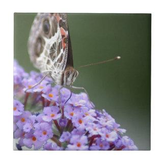 Schöner Schmetterling auf Schmetterlingsbusch Keramikfliese