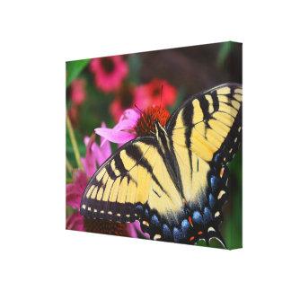 Schöner Schmetterling Leinwanddruck
