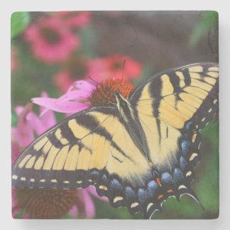Schöner Schmetterling Steinuntersetzer